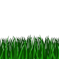 simple green grass on white background