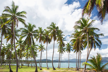 High palm trees on the ocean coast. Vacation concept. Samana, Dominican Republic