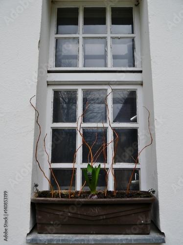 Fenster Mit Blumenkasten Davor Stock Photo And Royalty Free Images