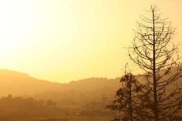 A horizontal presentation of a yellow sunset in the summer with the silhouette of dying bare trees.  Expresses climate change and loss of forests.
