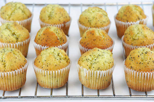 fresh baked small lemon muffin on the rack