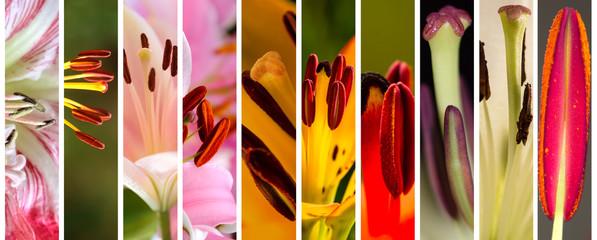 Macro stamens of blooming lilies
