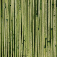 Texture of reeds or bamboo for background