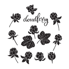 Cloudberry. Vector hand-drawn illustration on a white background. Collection of isolated silhouette elements for design.