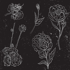 Vector collection of silver hand drawn peony and rose flowers and leaves on black background