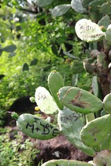 Name initials as love symbols cut into cactus