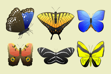 Colorful butterflies with abstract decorative pattern summer free fly present silhouette and beauty nature spring insect decoration. vector illustration.