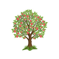 Apple tree with red fruits on white background. Isolated vector illustration.