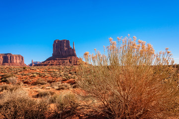 Golden flowers of the desert and East Mitten Butte in Monument Valley
