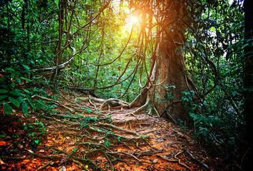jungla in borneo