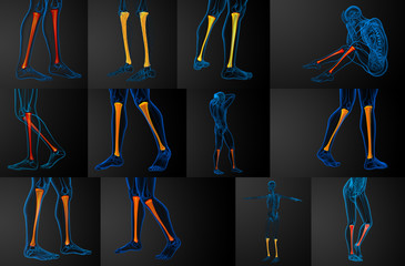 3d rendering medical illustration of the tibia bone