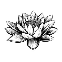 Vector water lily. Lotus illustration.
