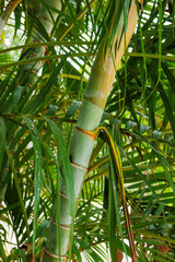 Green palm tree trunk