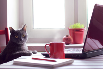 tired of working make the coffee break/ Pensive cat sitting at the table with laptop and red cup