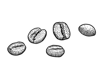 Coffee bean illustration, drawing, engraving, ink, line art, vector