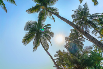 Green palm tree on blue sky background and sun