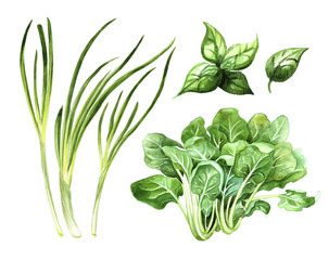 green vegetables set, onion spinach and basil watercolor illustration, organic market banner or healthy recipes design element