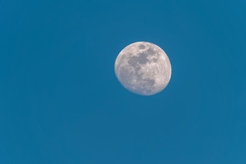The Moon in a Waxing Gibbous phase in the blue morning background. Detailed craters.