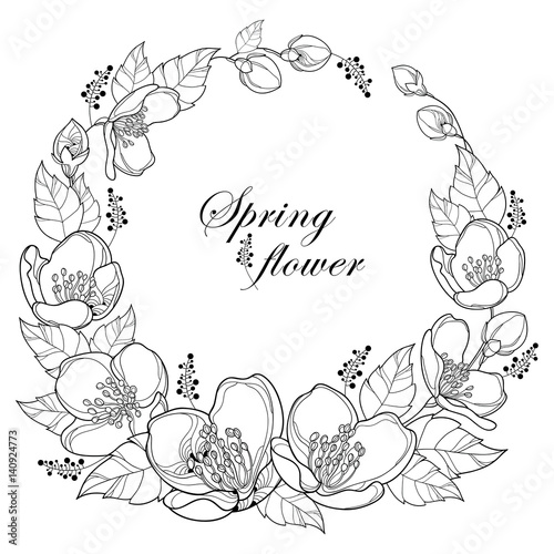 Line Drawing Of Jasmine Flower : Quot vector round wreath with outline jasmine flowers bud and
