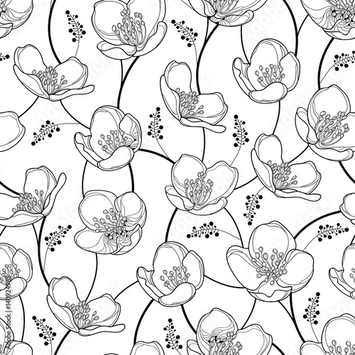 Vector Seamless Pattern With Outline Jasmine Flowers In Black On The White Background Elegance Floral