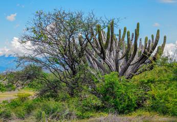A cactus garden - Mexico, Latin America