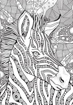 Coloring Book page for Adult. Zebra