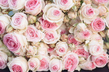 Pink roses background, lot of pink roses