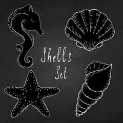 Hand drawn vector illustrations - collection of seashells. Marine set