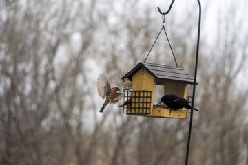 Birds at feeder as it begins to snow