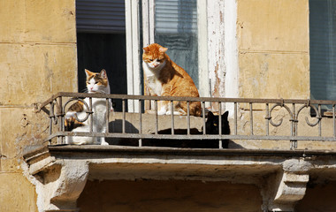 Cats in the old house.