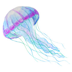 Jellyfish isolated n white background. Watercolor iilustration.