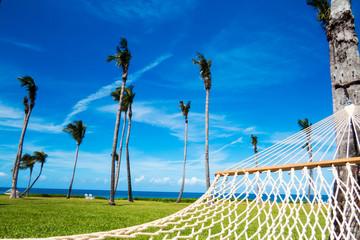 Tropical nature: Many palm trees with a blue sky, a hamak & the ocean. New Providence Island, Nassau, Bahamas.