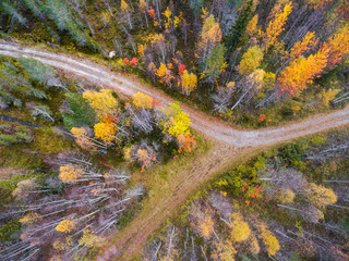 Drone image of trees in Autumn, Finland