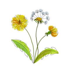 Hand made field flower dandelion