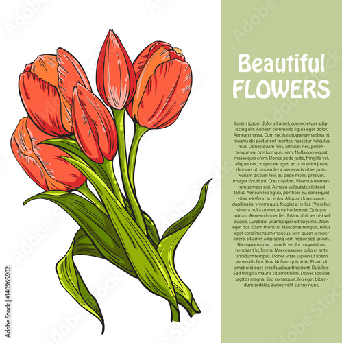bouquet of red tulips flowers template for your design vector