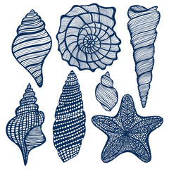 vector hand drawn maritime set - shells starfish