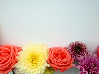 a range of colours, selective focus, rose, selective focus, copy space for text.