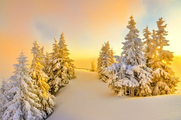 The golden trees on top a mountains Postavaru in winter season, Poiana Brasov, Romania.