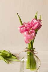 Fresh pink tulip flowers bouquet in a glass jar on white background