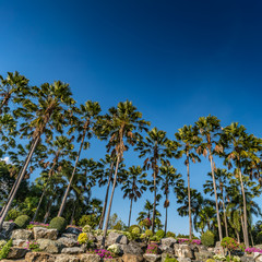 Palm trees on blue sky