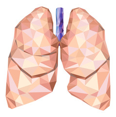 Human lungs in low poly with trachea. Vector
