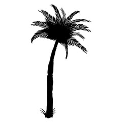 Silhouette of coconut palm tree, isolated on white background
