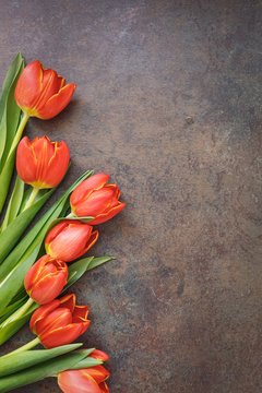 Fresh tulips on rustic stone background. Top view, blank space