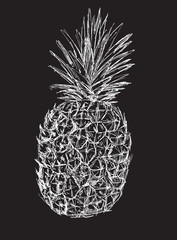 single pineapple sketch isolated on black