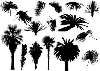 group of black palm trees and leaves on white