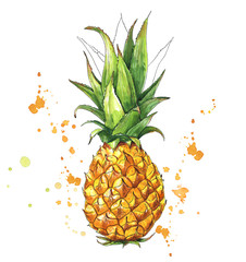 Juicy pineapple with splashes. Hand drawn illustration of tropical fruit. Watercolor