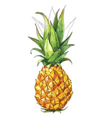 Pineapple, Tropical Fruit, Food. Watercolor illustration, Hand drawn