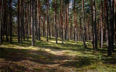 Summertime Forest