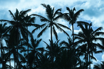 Coconut palm trees silhouettes on blue