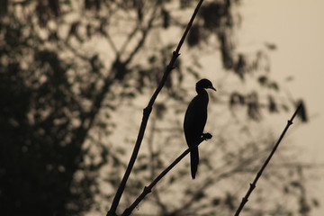 Silhouette of exotic bird